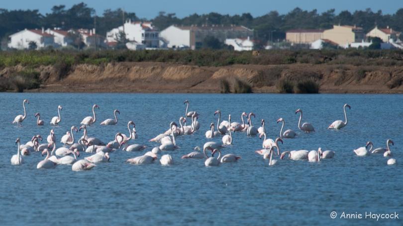 Flamingos at Castro Marim