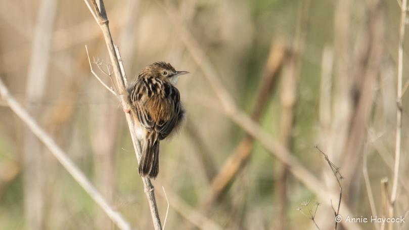 small bird in the Algarve